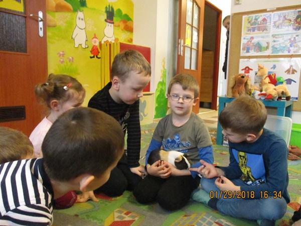 Nasze przedszkole odwiedziła świnka morska Huberta