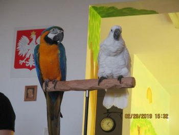Odwiedziły nas papugi